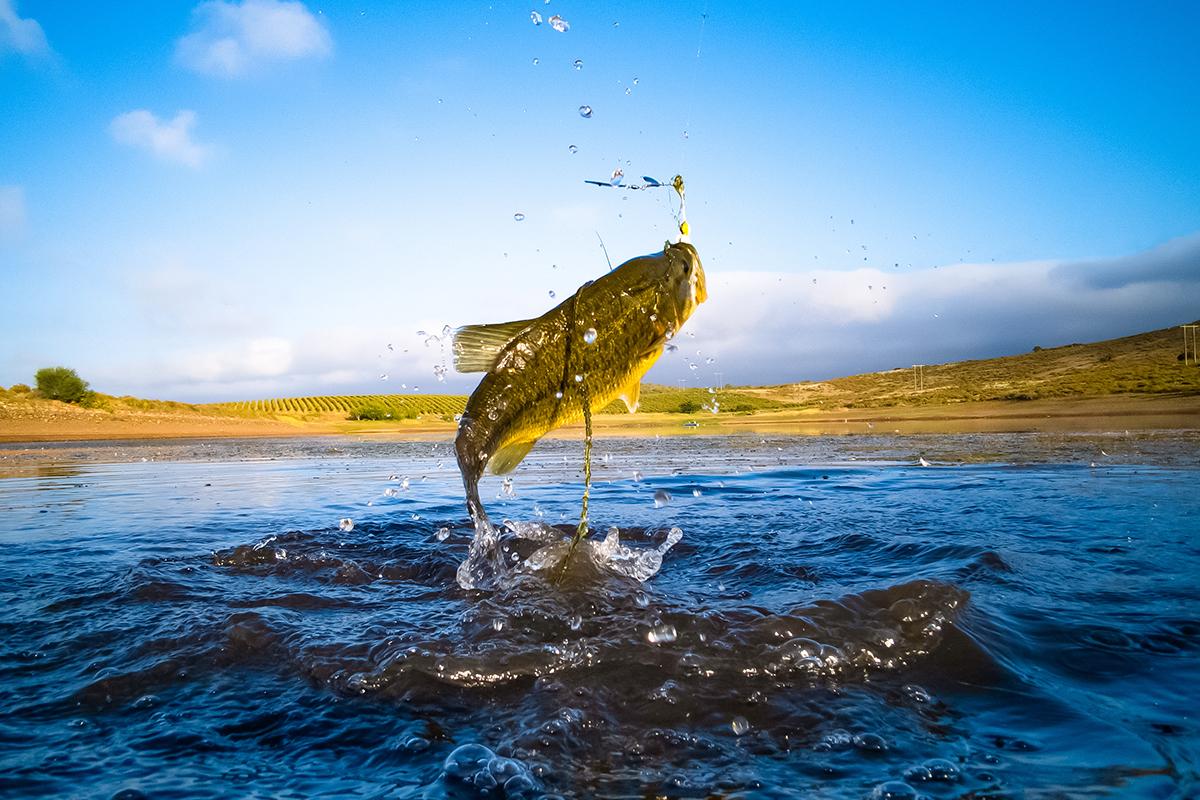 Moree's Sportman's Preserve Fishing