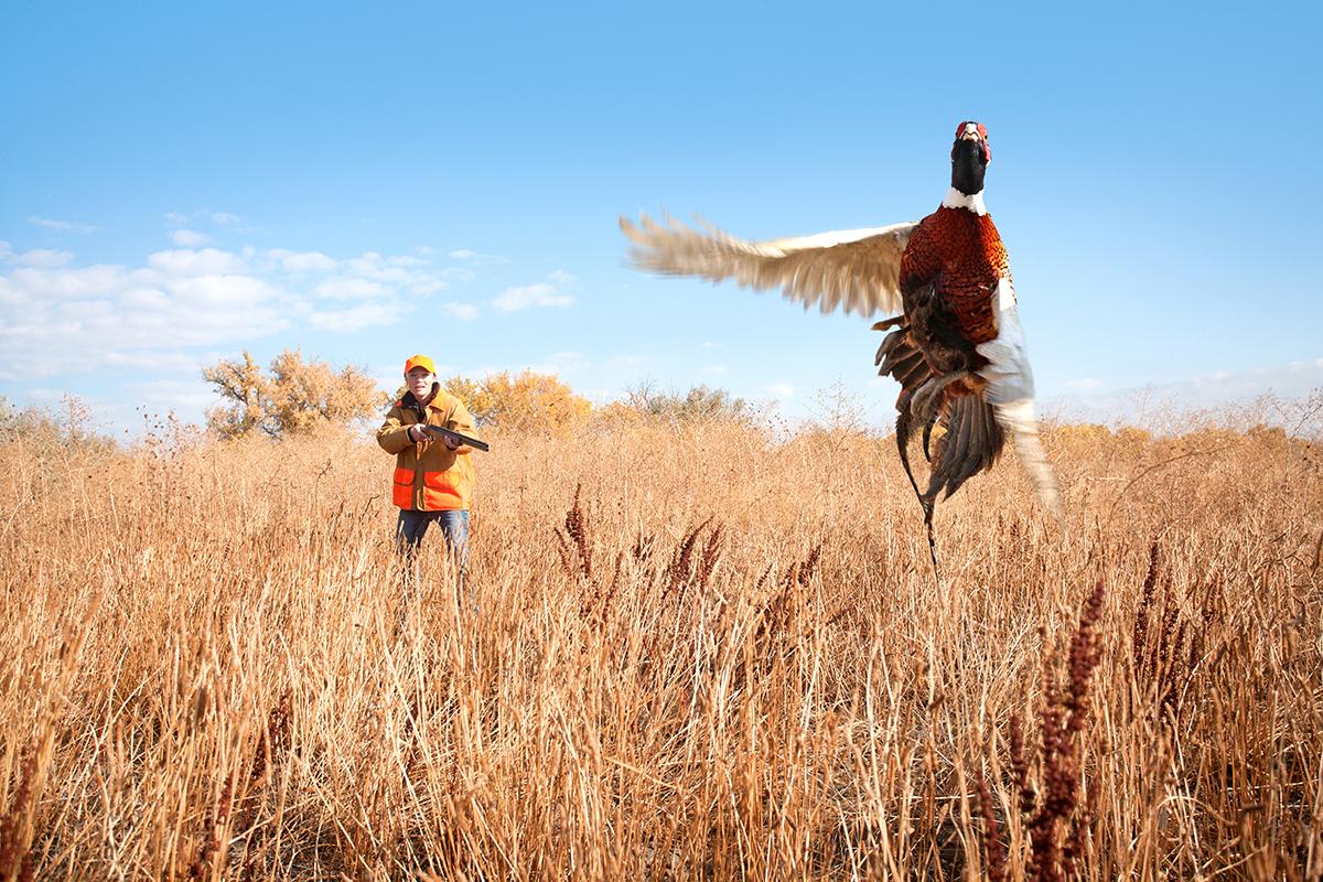 Moree's Preserve Pheasant Hunting